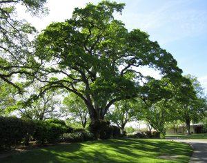 tree-113924_1920