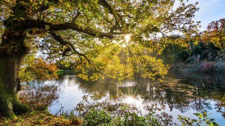 autumn-2963219_960_720