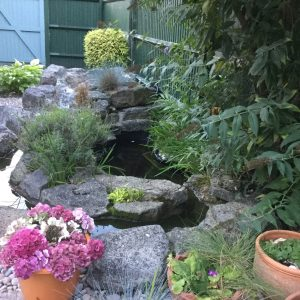 garden-with-pond